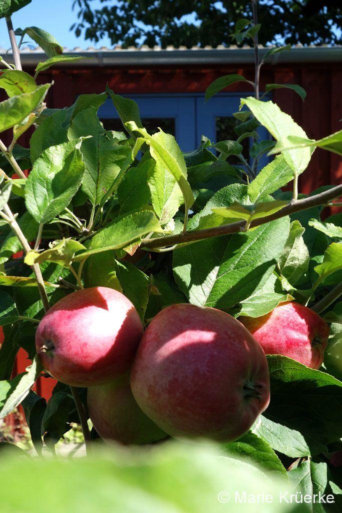 Ananas-Äpfel